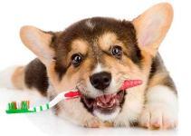 Cuidados de Perro