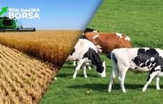 Tarımsal Kalkınmayı Destekleme Kurumu Hayvancılık Destekleri Üst Sınırı Değişti