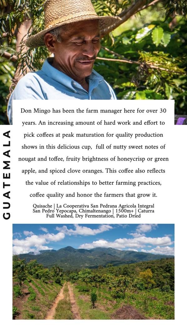 Quisache Guatemala SONDER Coffee