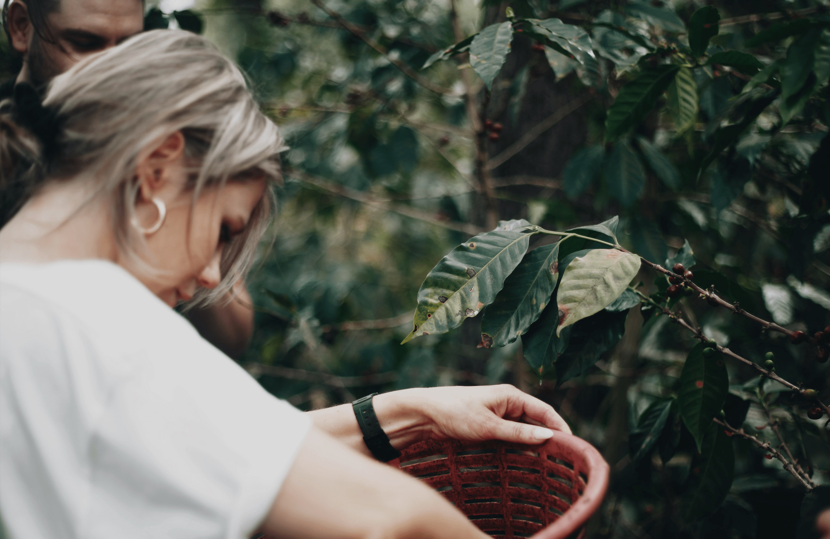 Anetta collecting coffee