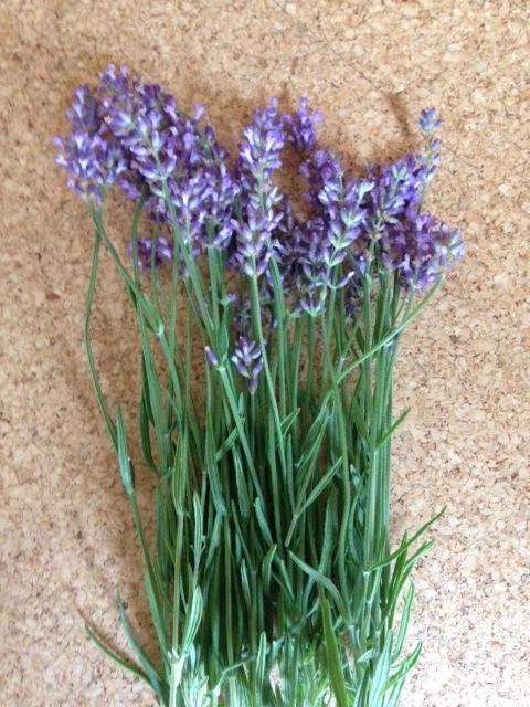 lavender popuri2016.jpg