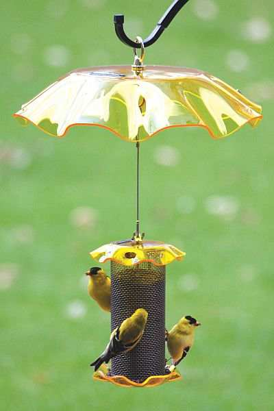 Forever 1 Qt Yellow Finch Feeder wYellow Weather Guard Attracting Backyard Finches at Songbird