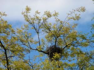 Songdove Books - bird's nest
