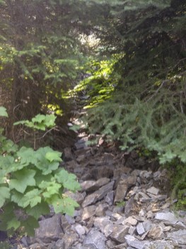 Songdove Books - Dry creek bed