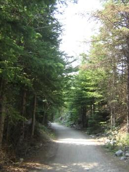Songdove Books - tree-lined pathway