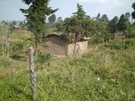 Songdove Books - Rwandan modern hut