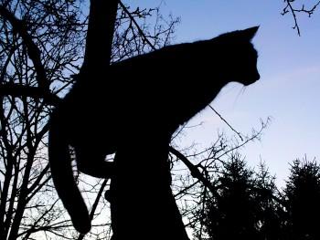 Songdove Books - Shadow Cat