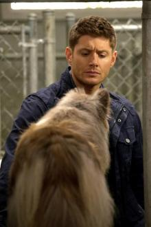 "Supernatural - S09E05 ""Dog Dean Afternoon"" - 6"