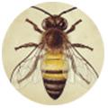bee-profil