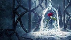 La belle et la bête - Rose
