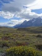 PN TORRES DEL PAINE / Route entre la Laguna Azul et le lago Pehoe
