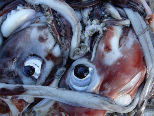 Marché de poisson à la caleta Membrillo