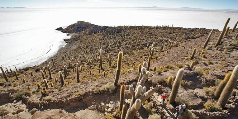 SALAR / Isla Incahuasi