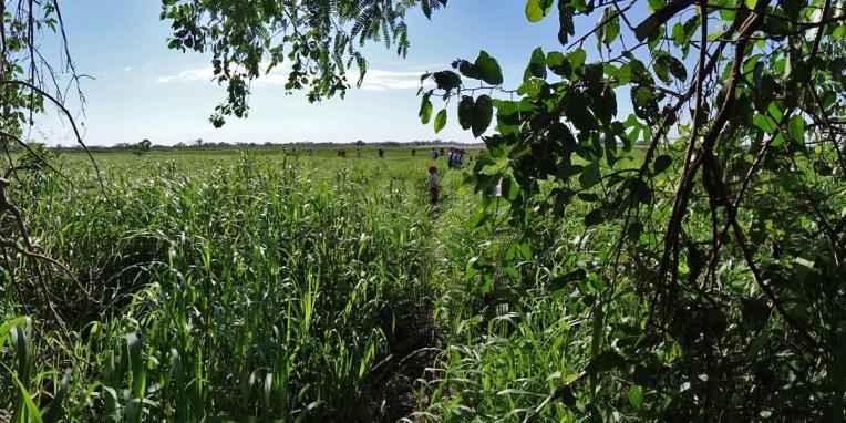 PN MADIDI / Dans les marais de la pampa : prêt pour la chasse à l'anaconda ?