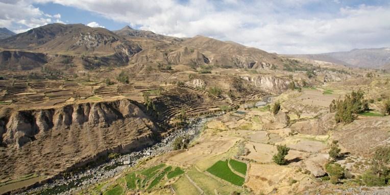 CANYON DE COLCA / Au sud de Chivay, vues sur les champs en terrasses qui couvrent les pentes du canyon profond de 3400 m, autrefois considéré comme le plus profond du monde