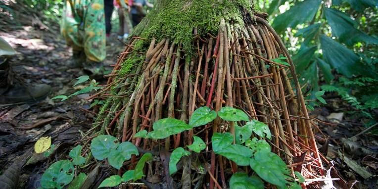PN MADIDI / Plus de racines pour puiser plus d'eau