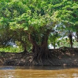 PN MADIDI / Dans les marais de la pampa
