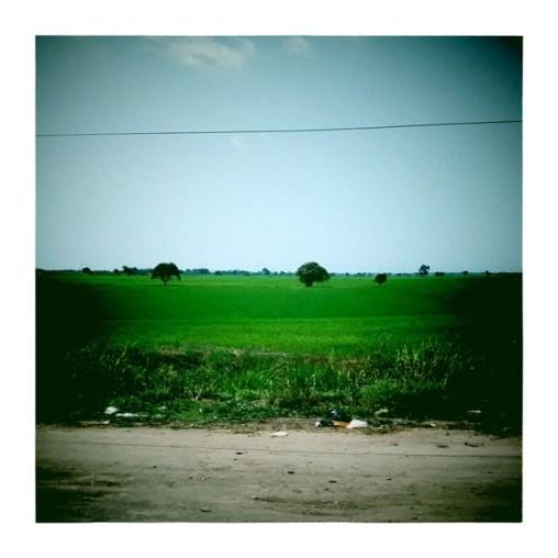 Paysage de rizières un peu avant TUMBES