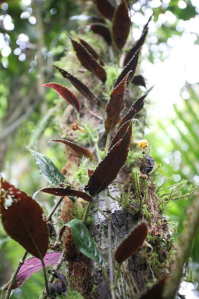 MINDO / Balade dans la jungle des hauteurs de la Yellow House