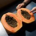 VILLA de LEYVA / Une papaye