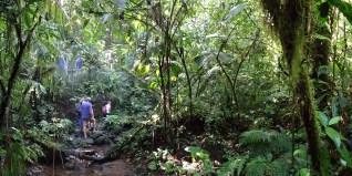 STATION BIOL. LA GAMBA / Balade dans la forêt tropicale