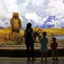 NYC / Les dioramas du muséum d'Histoire naturelle : des animaux naturalisés dans leur habitat naturel