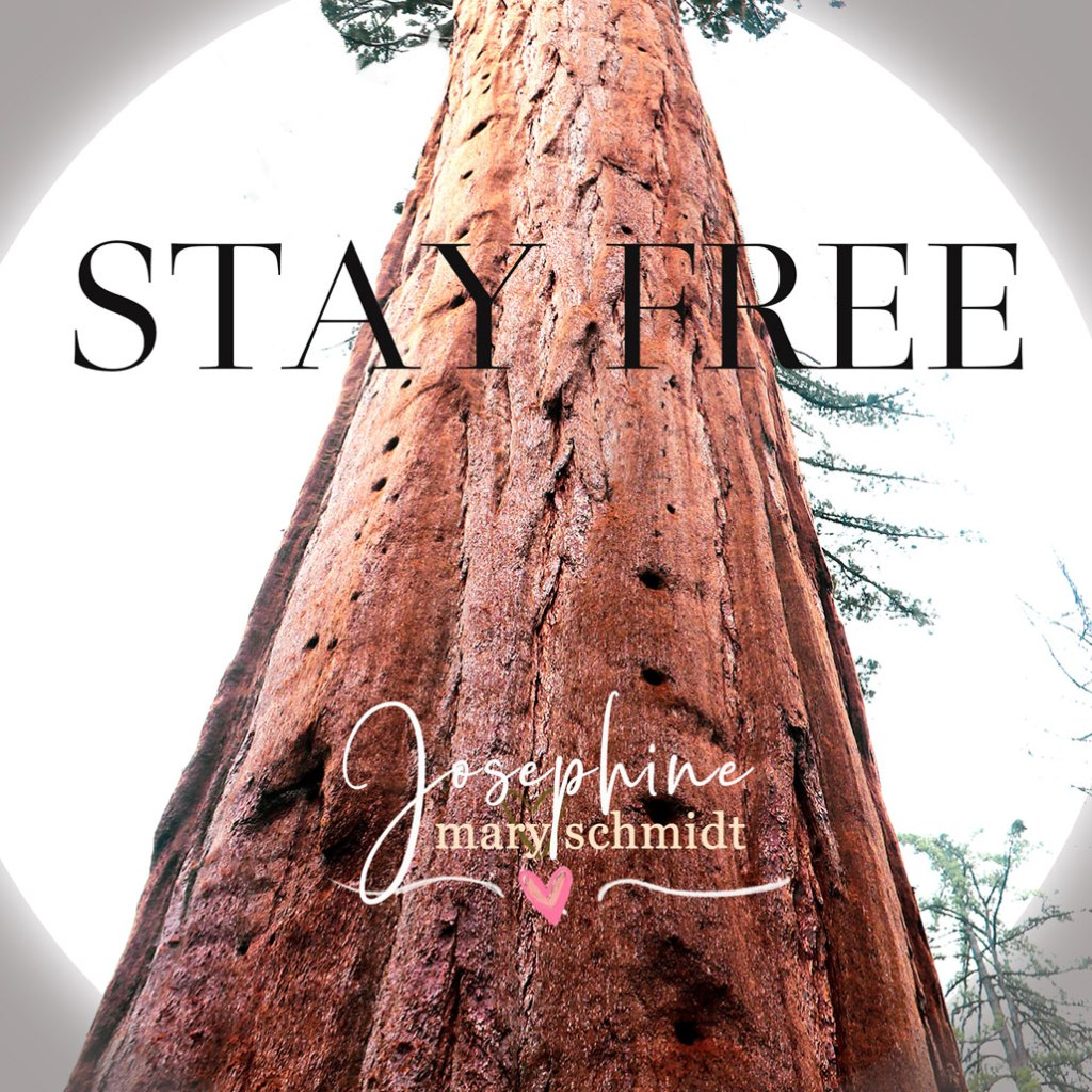 A tall sequoia tree symbolizing a strong Christian in Jesus