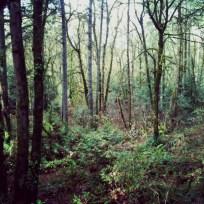 Tryon Creek Park (Portland with Sara's family), November 30, 2013, 2.5 miles