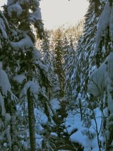 Stevens Pass Nordic Center (snowshoe), December 30, 2012, 3.5 miles