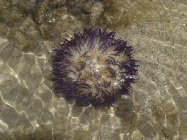 0693-6o-dia-passeio-de-escuna-recife-de-fora-ourico
