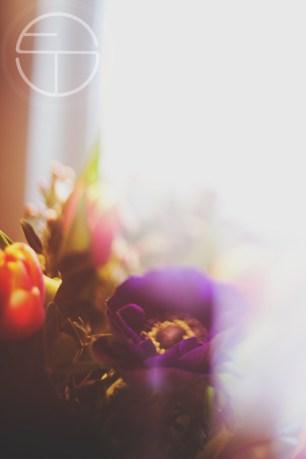 februar 2016 blumen 4freunde daisy schnee_0968 copy
