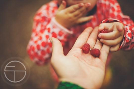 "homegrown top ten image ""The Gratitude Collaborative"""
