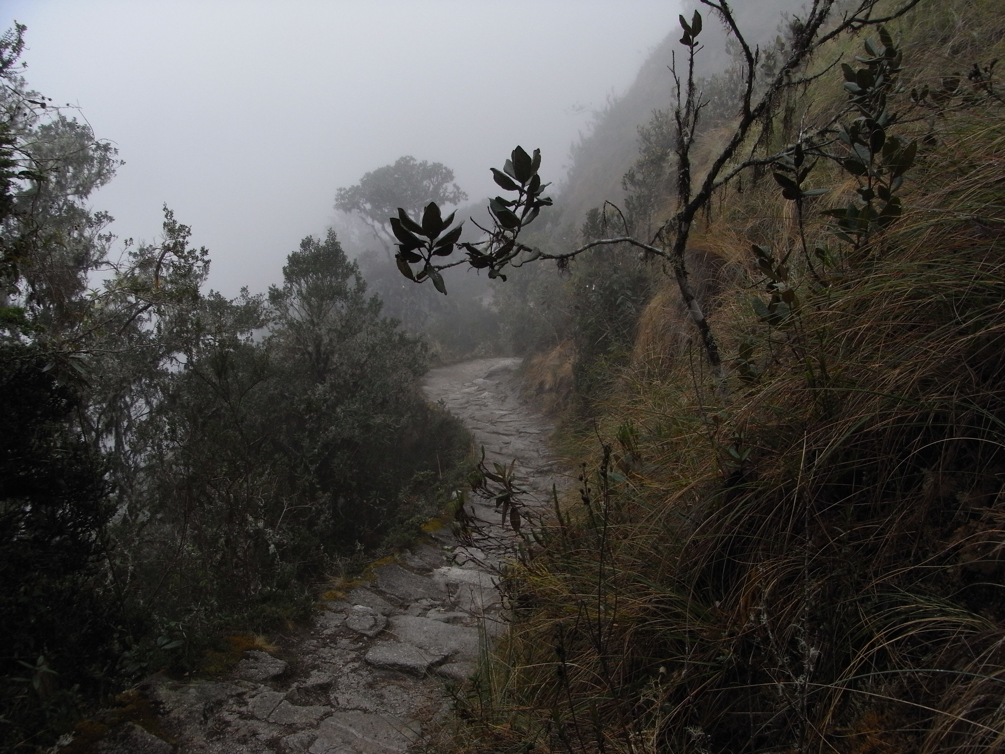 the Inka trail in the rain can be atmospheric!