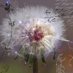 Stern-Blume-4_cmyk