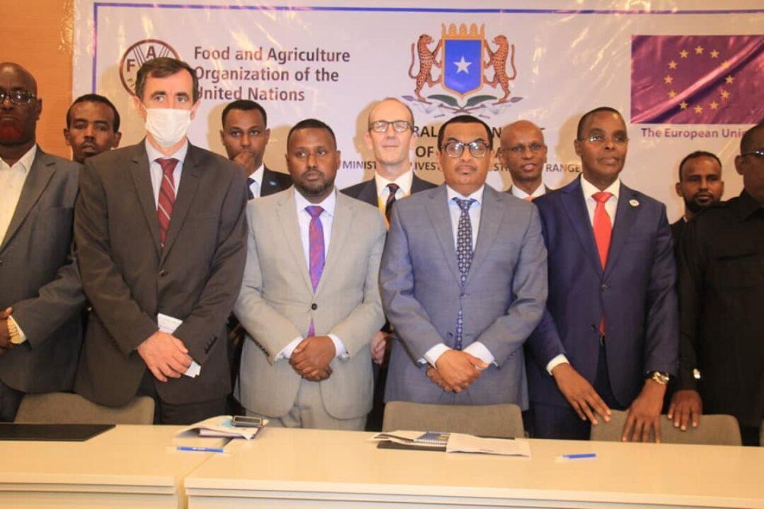 Somalia: EU begins €14.7M livestock, fisheries project
