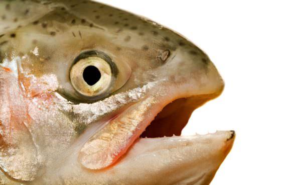Во сне приснилась копченая рыба. Сонник копченая рыба для женщин