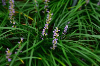 Probably a combination of bloom and tilt shift