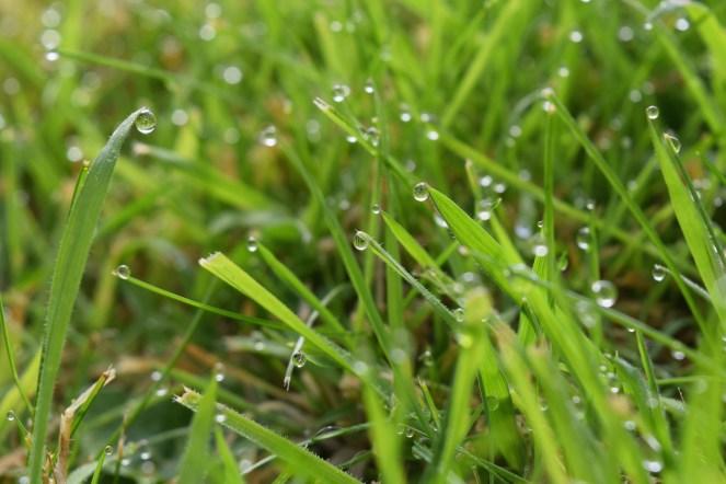 Hooray for English rain, causing great photography.