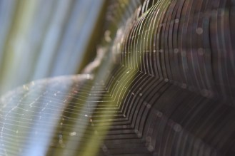 Just a random shot of my a spider web, with the morning sun making it glow nicely.