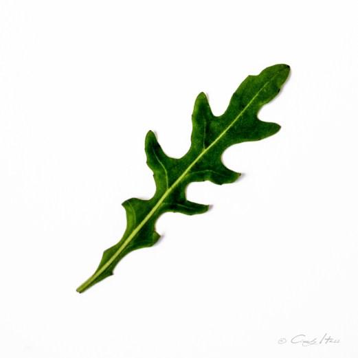 Rucola, Natur, Salat