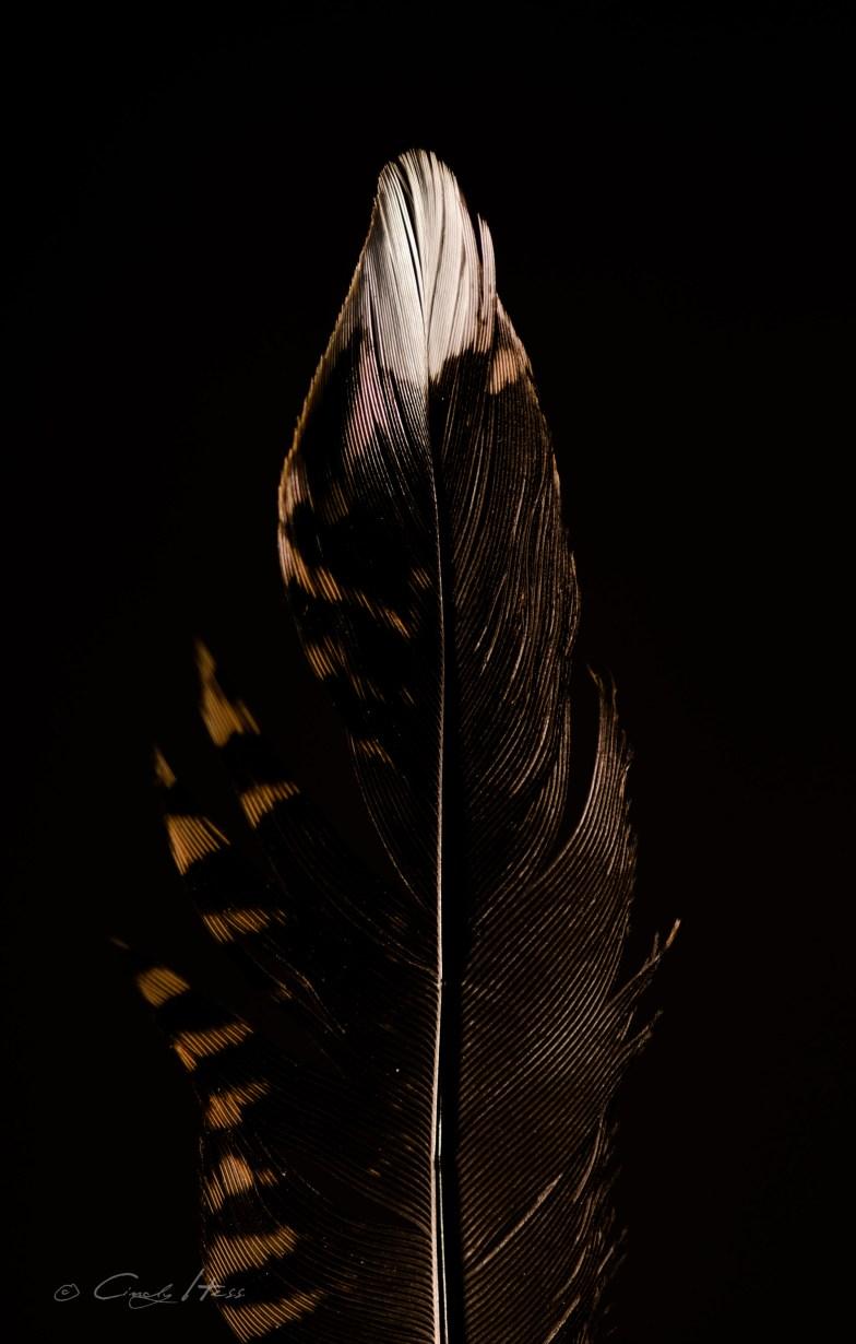 Waldschnepfe, low key, Makro, feather, bird, Vogel, Wald