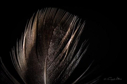 Makro, low key, Vogel, bird, feather