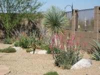 Backyard Landscaping Ideas Tucson Az - Backyard Design