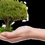 Si quieres adoptar un árbol tienes que cuidarlo