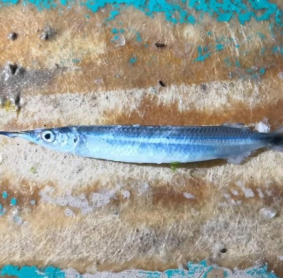 pez pajarito