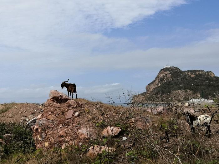 Isla de los Chivos Mazatlán