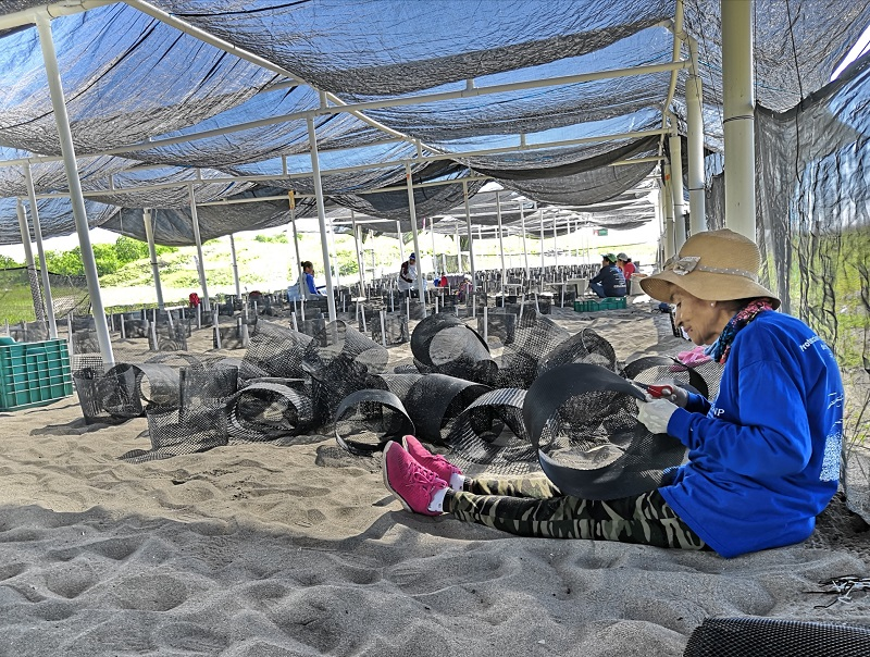 Mujeres cuidan tortugas