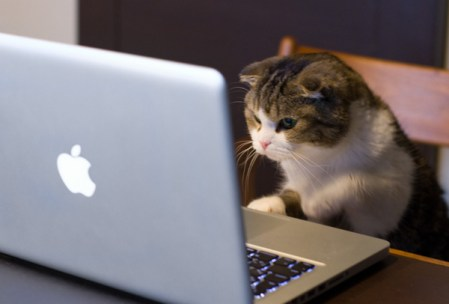 Gato macbook