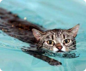 Gato al agua