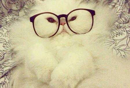 Gatos ciegos